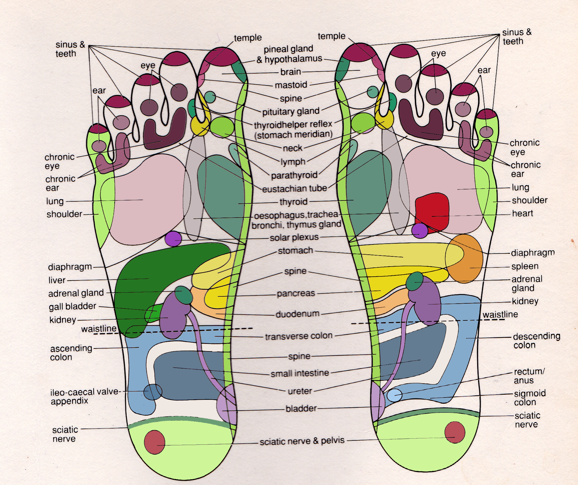 foot map colour